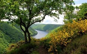 fiume, Hills, verdura, alberi