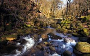 primavera, foresta, fiume, ruscello, pietre, ponte