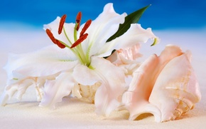 shell, Flowers, background