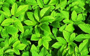 Plants, leaves, nature, texture