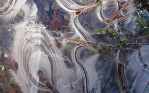 ice, nature, leaves, needles, texture