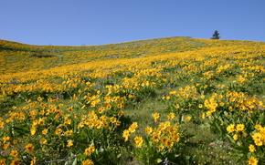 поле, цветы, пейзаж