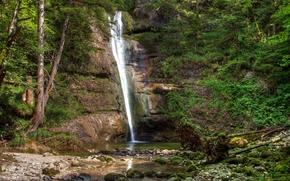 alberi, piccolo fiume, cascata