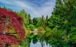 lake, Trees, nature