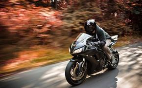 Honda, CBR, motocicletta, Honda, strada, velocit, autunno, fogliame, motociclista, casco, auto, macchinario, Auto