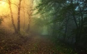 tramonto, foresta, strada, nebbia