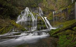 las, wodospad, rzeka, mech, krajobraz