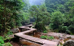 foresta, parco, alberi, traccia, ponte