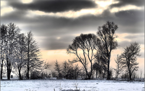 Winter, snow, Trees, clouds