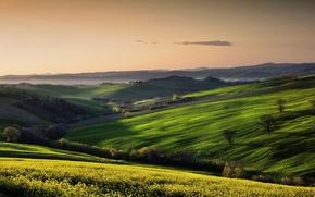 field, sky, landscape