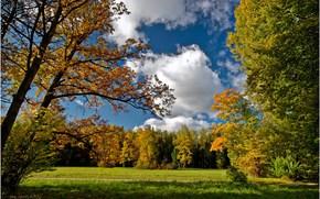 осень, небо, деревья, пейзаж