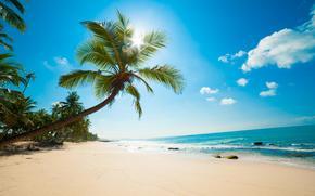 beach, tropics, sea, sand, Palms