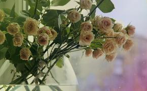 Roses, wazon, rano