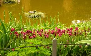 волоём, цветы, природа