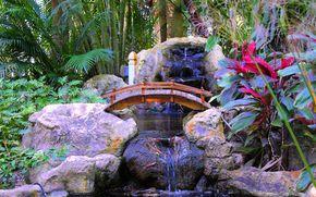palma, kamienie, rolina, wodospad, most, wntrze