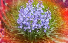 Flowers, Bells, background