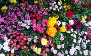 花卉, 花坛, флора