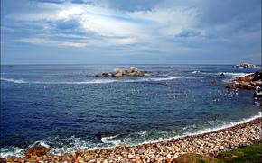 mar, playa, piedras, Aves