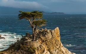 samotny cyprys, Pwysep Monterey, California, Pacyfik, Monterey, California, cyprys, drzewo, skalny, Pacyfik, wybrzee