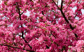 Flowers, branches, branch