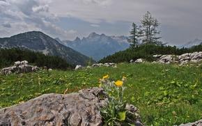 Montagne, Rocks, alberi, paesaggio