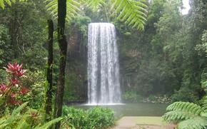 瀑布, 池塘, 树, 景观