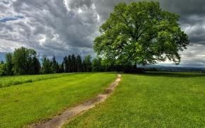 campo, traccia, nuvole, albero, paesaggio