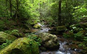森, 小さな川, 石, 木, 風景