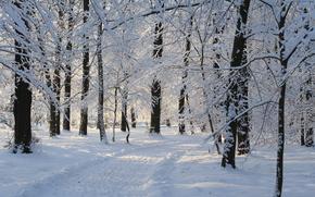 inverno, parco, foresta, traccia, paesaggio