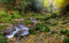 autumn, forest, small river, stones, landscape