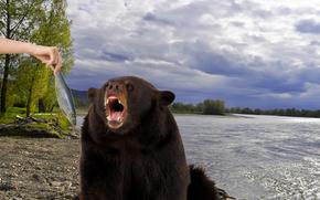 opatrzone, ryba, wybrzee, rzeka, Jenisej, rka, karmienie