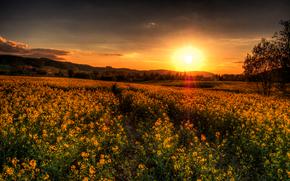 Sonnenuntergang, Feld, Landschaft