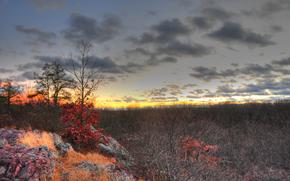 autunno, tramonto, alberi, paesaggio