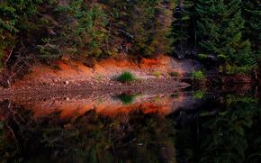autunno, stagno, foresta, alberi, paesaggio