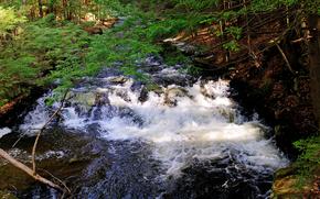fiume, ruscello, alberi, paesaggio