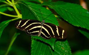 бабочка, растения, листья, природа