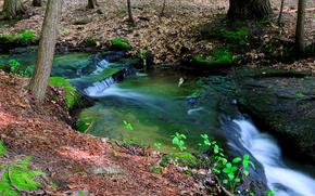 река, перекаты, листья.лес, природа