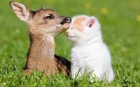 fawn, kitten, Friends