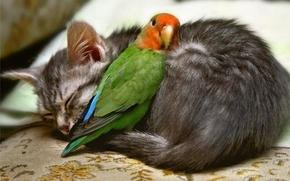 kitten, parrot, Friends