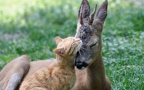 cat, roe, Friends