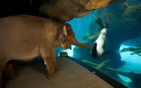 elephant, Seal, Friends