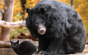 bear, cat, Friends