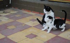 cat, Street, possession