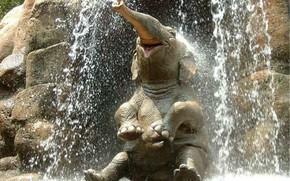 слон, водопад, удовольствие