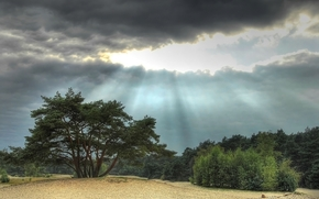 alberi, nuvole, paesaggio
