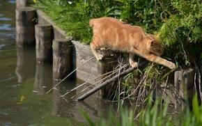 рыжий кот, переход, ситуация, вода