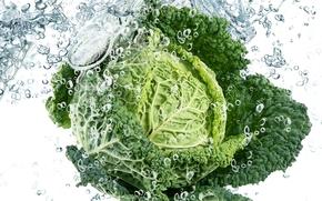 cavolo, verde, acqua, gocce, spruzzo, vegetale, vegetale, cavolo, verde, fogliame, acqua, spray, gocce, freschezza