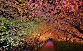 notte, primavera, parco, vicolo, controluce