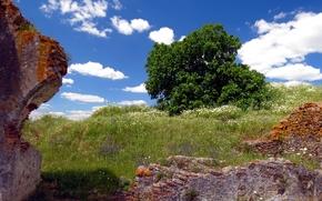 поле, руины, дерево
