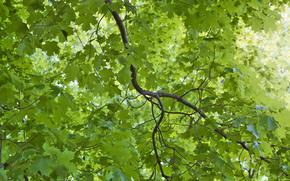 ветки, листья, природа